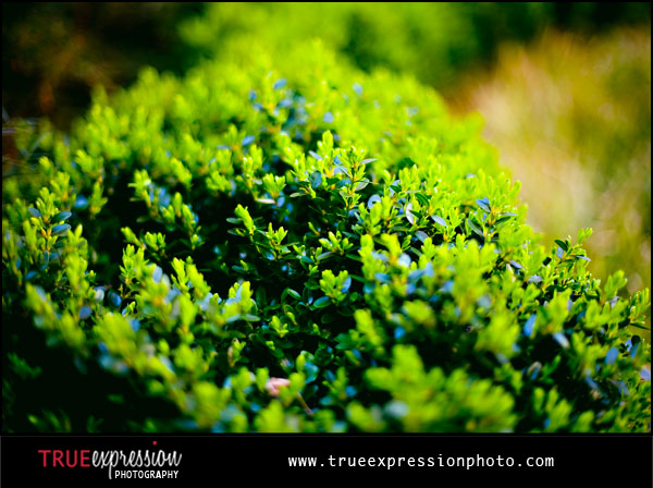 bright green bushes